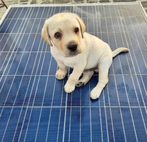 Dog on Solar Panels Cute
